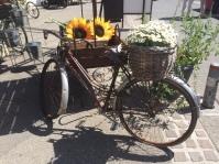 Old Bike & Marguerites L'Isle Sur La Sorgue