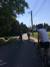 A quiet lane cycling towards L'Isle Sur La Sorgue, via the 'Hippodrome'