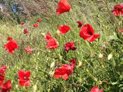 A wildflower verge
