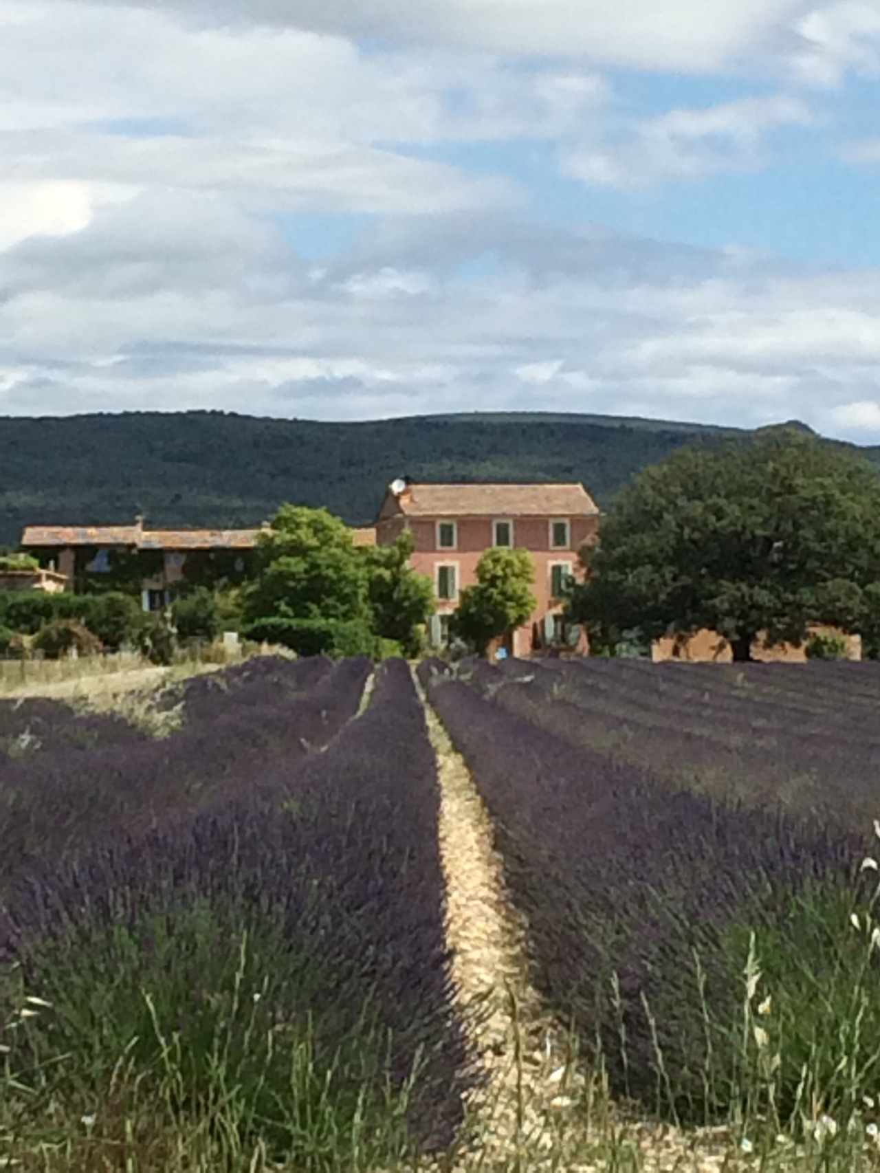 Beyond the Veloroute – cycle #5 – Cherries, Lavender & the Ochres of Roussillon