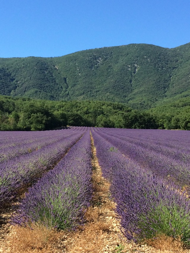 Lavender Fields in France: a bike ride through Luberon region | Vaucluse Dreamer Travel Blog