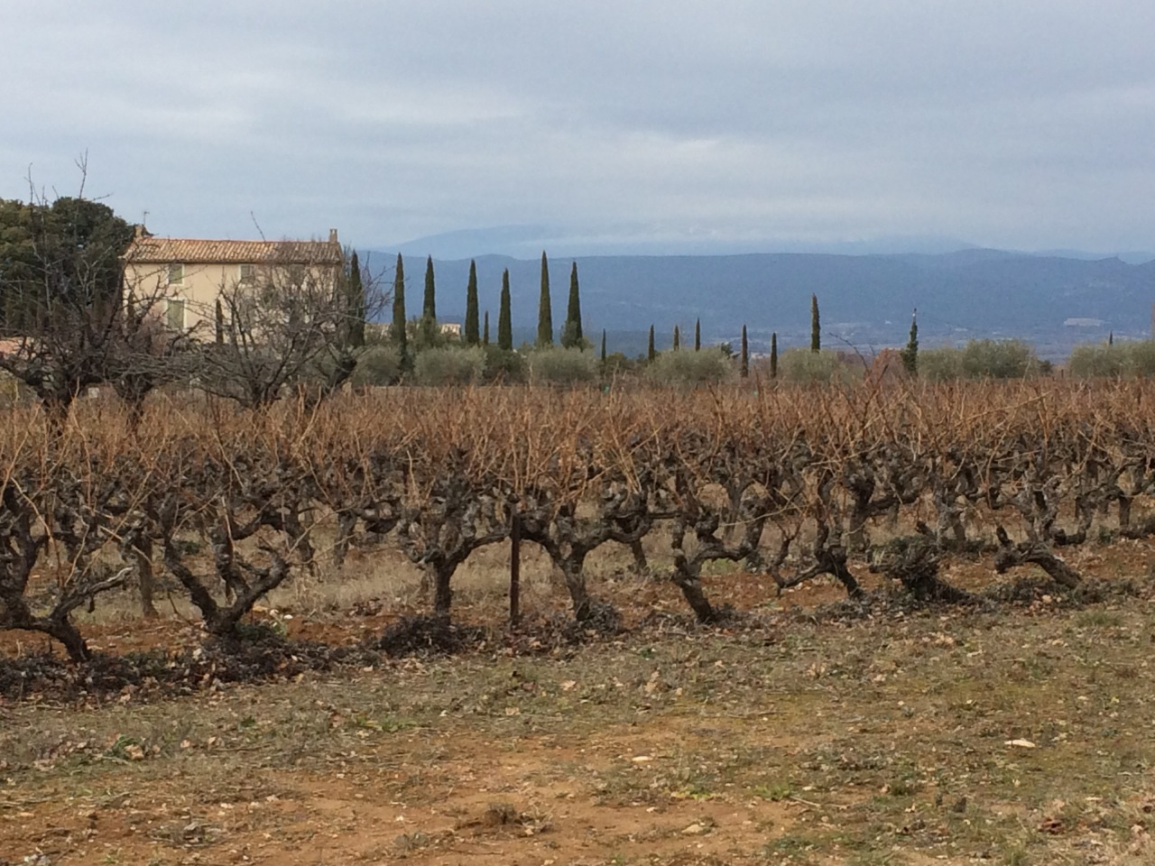 Beyond the Veloroute cycle #8 – Through the Vineyards