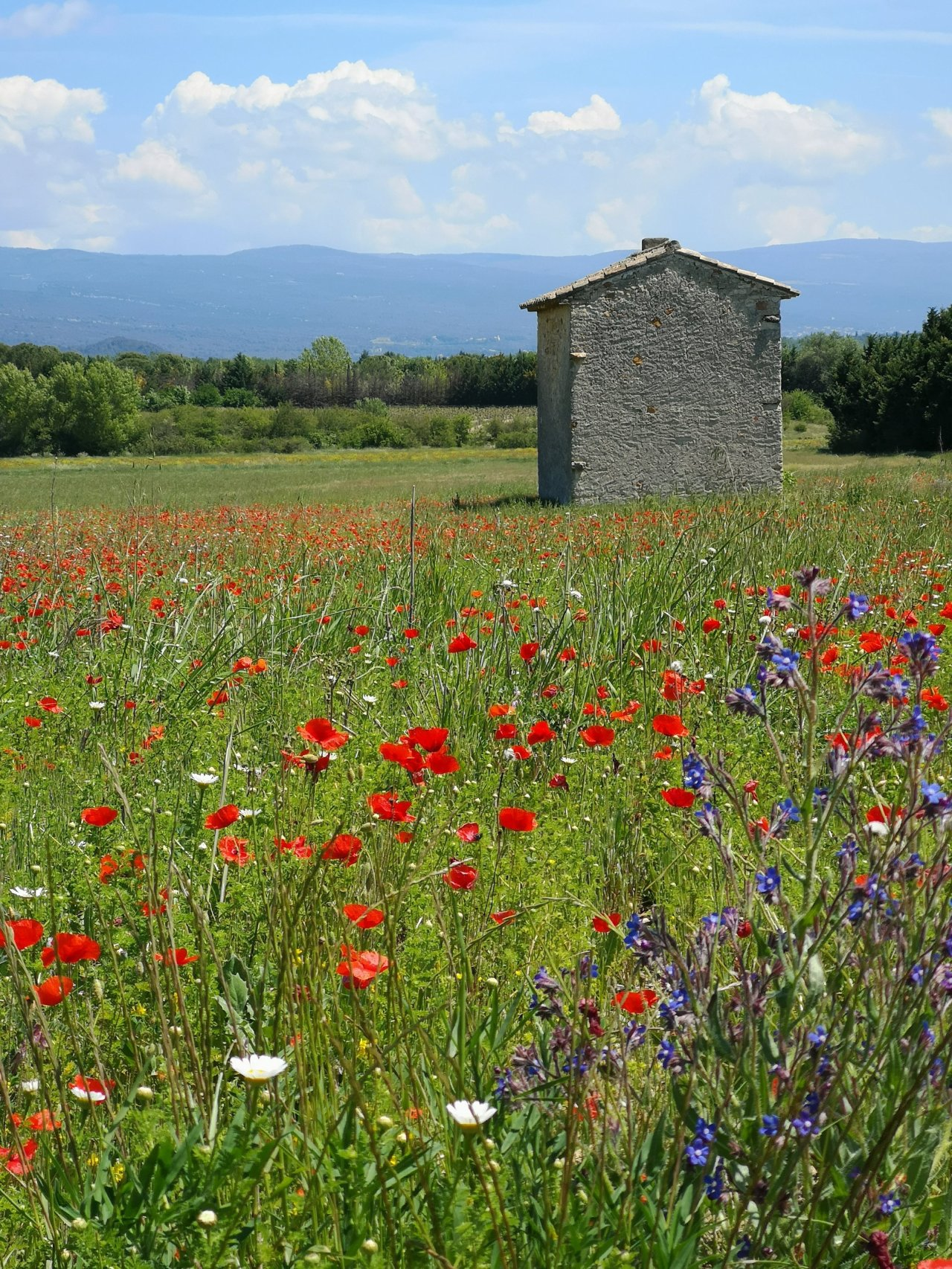 Bee-Friendly Provence & a French Lesson in an Organic Garden