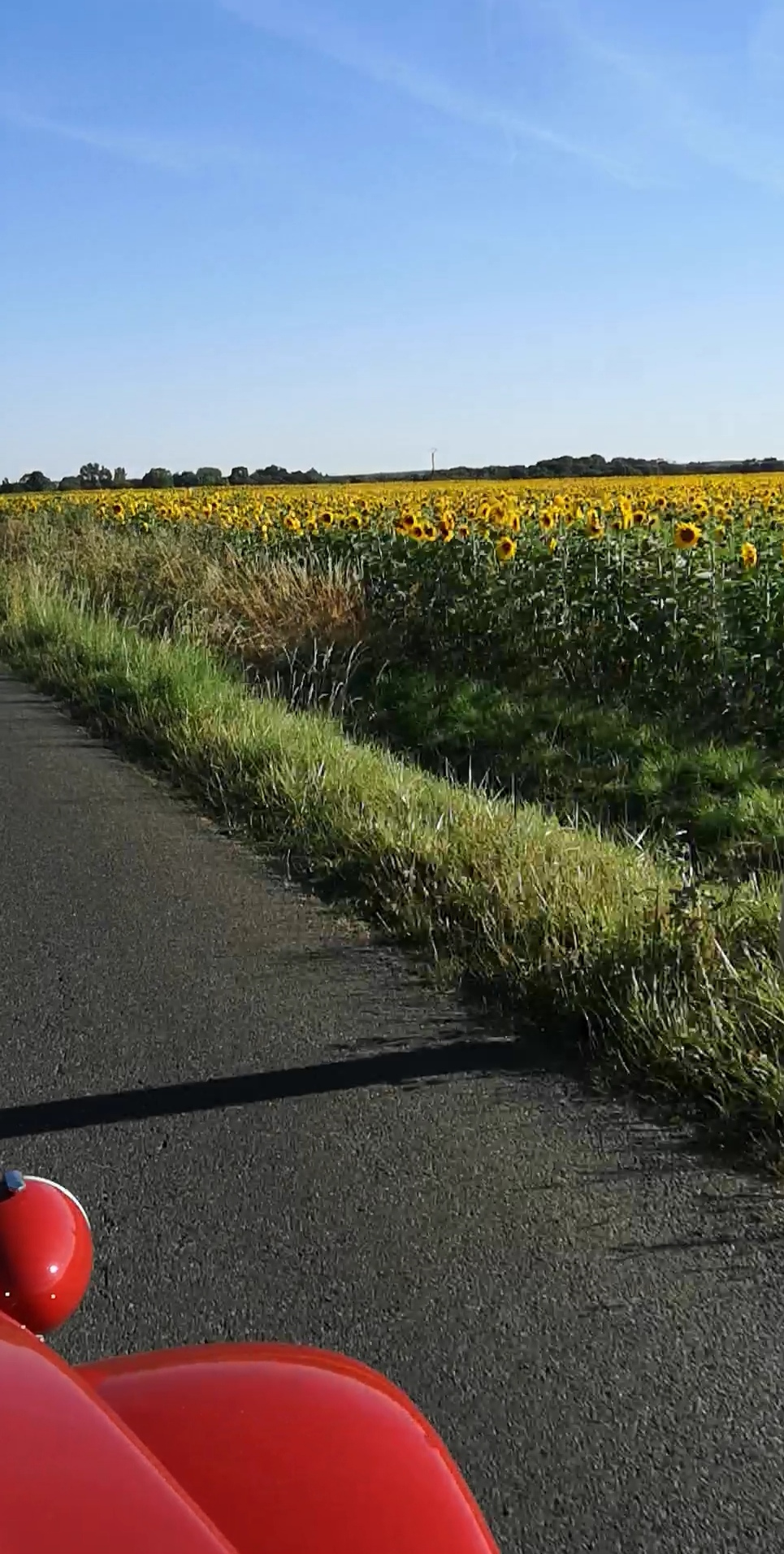 Fifi's French Adventure Day 2 – Roscoff to The Sunflowerfields