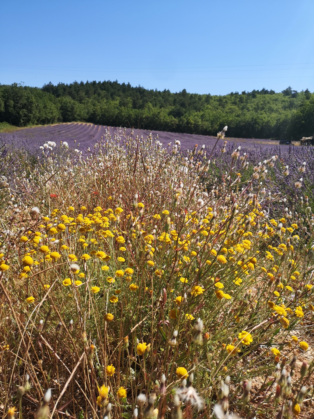 A Lavender-scented cycle ride to Sault – Video